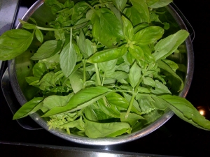 basil leaves for pesto